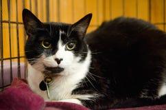 Kat bij dierlijke schuilplaats Stock Fotografie