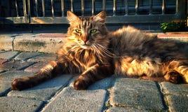 Kat bij het asfalt Stock Afbeelding