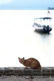 Kat bij het overzees met boot Royalty-vrije Stock Afbeeldingen