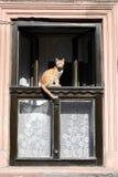 Kat bij het venster royalty-vrije stock afbeelding
