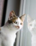 Kat bij het venster Royalty-vrije Stock Afbeeldingen