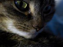 Kat bij nacht Stock Foto's