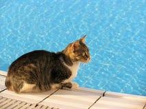 Kat bij pool Royalty-vrije Stock Fotografie