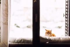 Kat bij venster Stock Fotografie