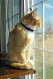 Kat bij venster Royalty-vrije Stock Foto