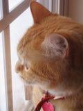 Kat bij Venster Stock Afbeeldingen