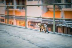 Kat binnen de stad in Stock Fotografie