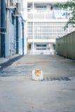 Kat binnen de stad in Stock Foto