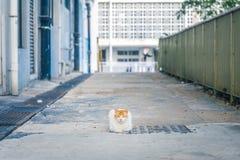 Kat binnen de stad in Royalty-vrije Stock Afbeelding
