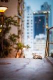 Kat binnen de stad in Royalty-vrije Stock Afbeeldingen