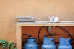 Kat in binnenplaats naast een oranje muur Royalty-vrije Stock Afbeelding