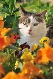 Kat in bloemen Royalty-vrije Stock Fotografie