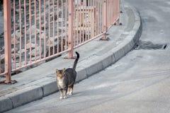 Kat buiten een omheining in een middag Royalty-vrije Stock Fotografie