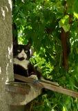 Kat buiten het venster Stock Foto's