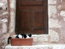 Kat buiten plattelandshuisje in de Provence Royalty-vrije Stock Foto