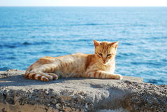Kat in Cadiz Royalty-vrije Stock Foto