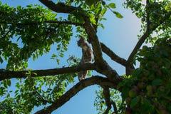 Kat in de appelboom Stock Foto