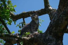 Kat in de appelboom Royalty-vrije Stock Afbeelding