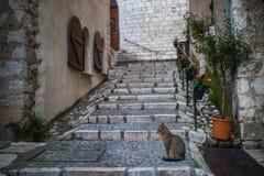 Kat in de avond bij oude steets van Heilige Paul de Vence Stock Afbeeldingen