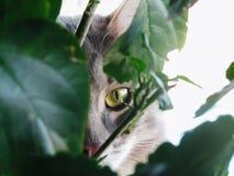 Kat in de bladeren stock fotografie