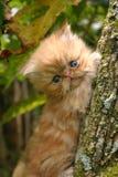 Kat in de boom Stock Foto