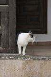 Kat in de deuropening Stock Afbeeldingen