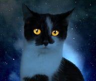 Kat in de donkere nacht Stock Afbeeldingen