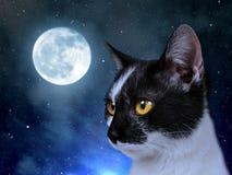 Kat in de donkere nacht Stock Foto's