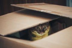 Kat in de doos royalty-vrije stock fotografie