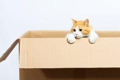 Kat in de doos Stock Fotografie
