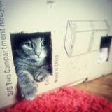 Kat in de doos Royalty-vrije Stock Foto