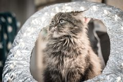 kat, de filmsuperster Stock Afbeelding