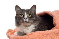 Kat in de handdoek Stock Afbeeldingen