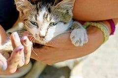 Kat in de handen Stock Foto