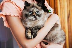 Kat in de handen van eigenaar Royalty-vrije Stock Afbeeldingen