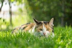 Kat de jacht in gras stock afbeelding