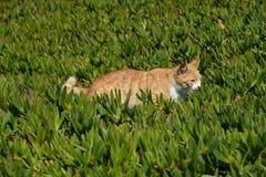 Kat de jacht op een groen gebied Stock Afbeeldingen