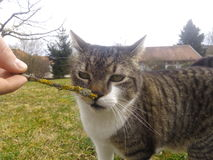 Kat in de lente openlucht Royalty-vrije Stock Foto's