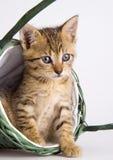 Kat in de mand Royalty-vrije Stock Afbeelding
