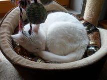 Kat in de mand Stock Afbeelding