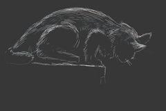 Kat in de nacht Royalty-vrije Stock Afbeeldingen