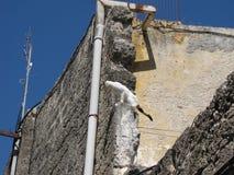 Kat in de oude stad Rhodos Royalty-vrije Stock Foto