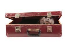 Kat in de oude uitstekende koffer Stock Foto's