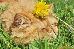 Kat in de paardebloemen Stock Fotografie