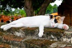 Kat in de ruïnes Royalty-vrije Stock Afbeelding