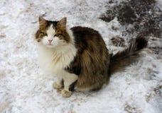 Kat in de sneeuw Stock Afbeeldingen
