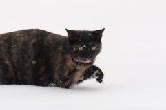 Kat in de sneeuw stock foto's
