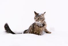 Kat in de sneeuw Stock Fotografie