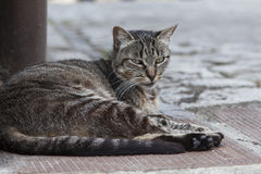 Kat in de straat Royalty-vrije Stock Fotografie