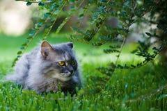 Kat in de tuin Royalty-vrije Stock Afbeeldingen